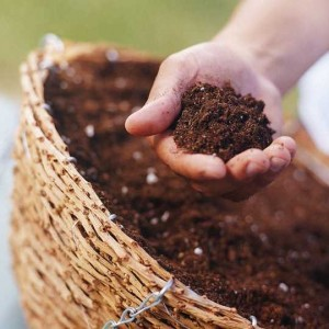 Đất trồng cây các loại giàu dinh dưỡng
