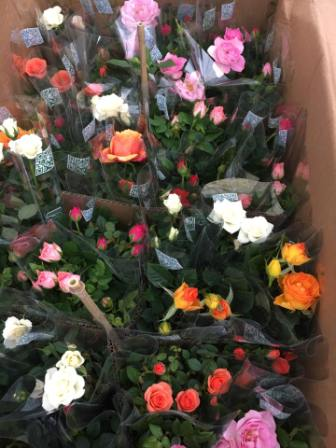 Một số loại hoa cây cảnh